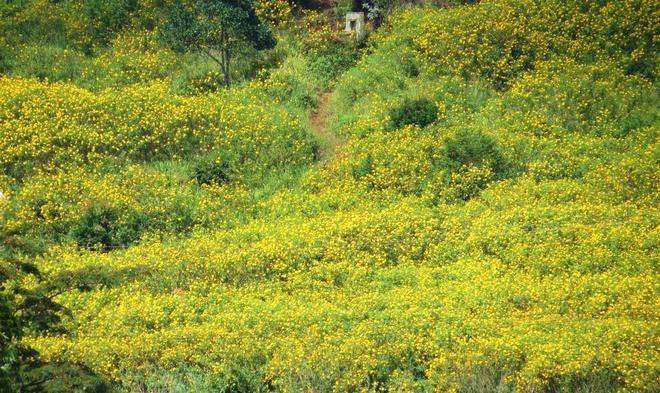 Ngam hoa da quy cho nhung thang cuoi nam - 8