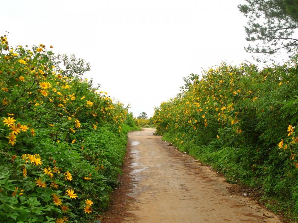 Ngam hoa da quy cho nhung thang cuoi nam - 11