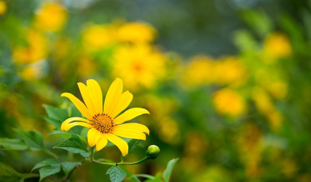 Ngam hoa da quy cho nhung thang cuoi nam - 6