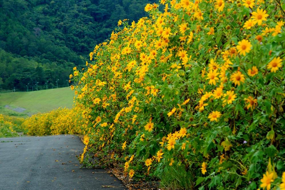 Ngam hoa da quy cho nhung thang cuoi nam - 10