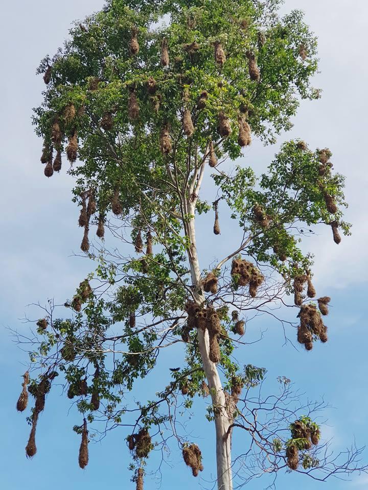 Tran Dang Dang Khoa lac troi giua rung Amazon voi nhung bi an day thu vi - 9